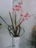 Orquidea Rosa Cachepo Branco