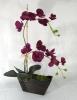 Orquidea falenopsis Grande