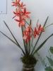 Orquidea no Vidro