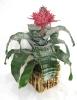 Bromelia com Flor