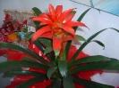 Bromelia vermelha