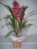 Orquidea Cymbidium 4 hastes