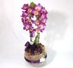 Orquidea Dendrobium Roxa
